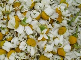 Los mejores productos naturales, flores, manzanilla, notas naturales