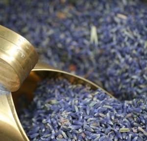 Remedio natural para manos frías. Imagen Flores Lavanda