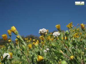 Taller plantas comestibles de primavera Collserola @ Parc Natural de Collserola   Barcelona   Barcelona   España