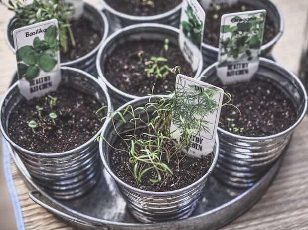 macetas con plantas aromaticas como la albahaca