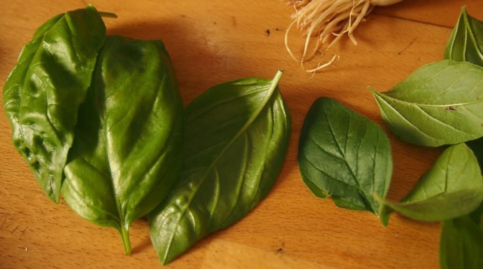 Salsa de pesto. Imagen hojas albahaja
