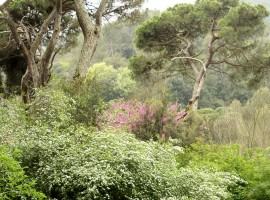 Aplicacion movil para identificar arboles, Collserola, notas naturales