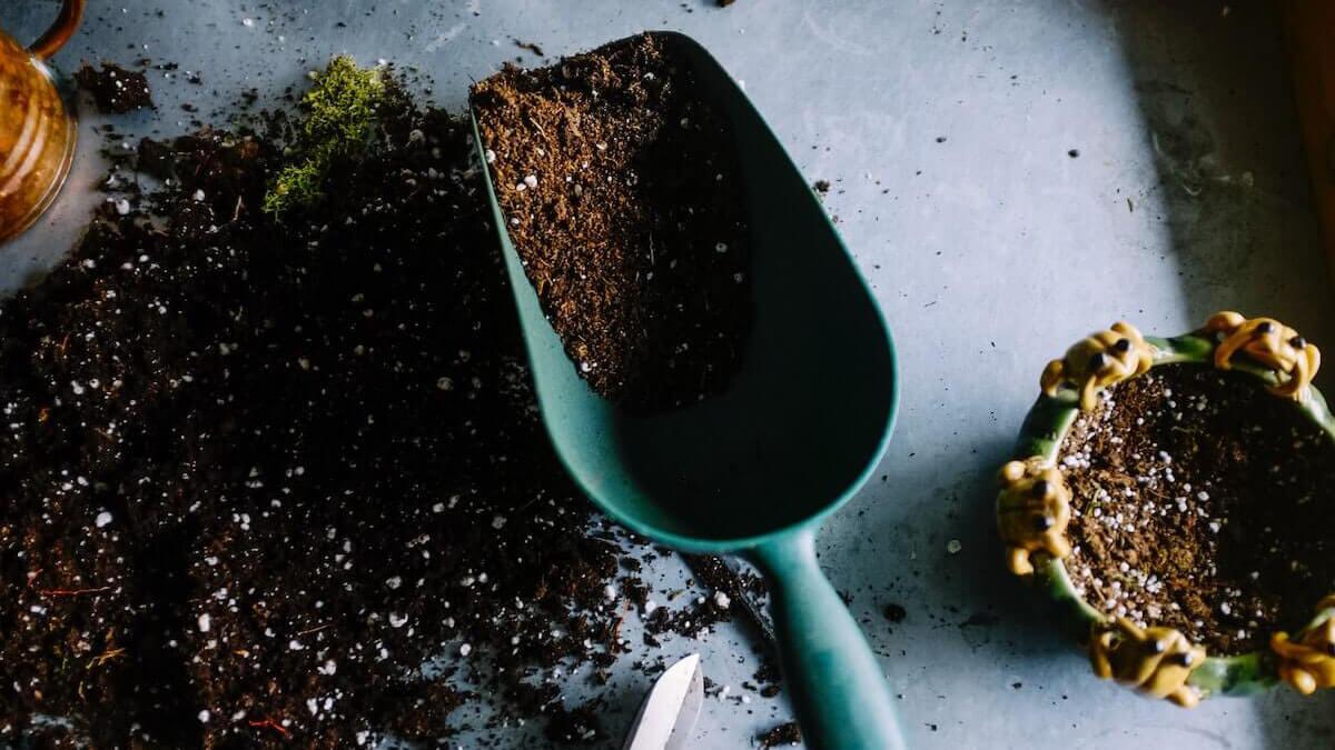 terapia con plantas es un método anti estrés a bajo coste