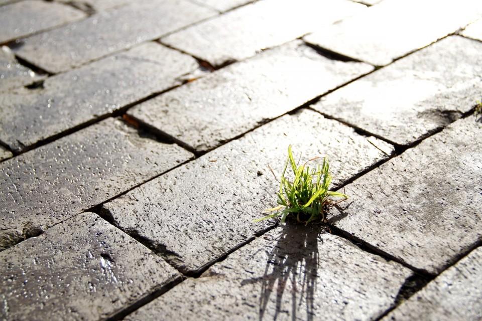 Ciudades sostenibles. Imagen hierba espontanea en la acera