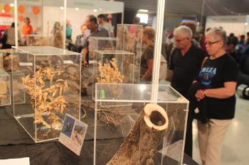 Feria medio ambiente tarrega, exposición, sostenibilidad, notas naturales