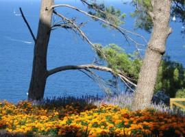 Jardines mediterraneos de Cap Roig, pino maritimo, flores, amarillo, mar, costa brava