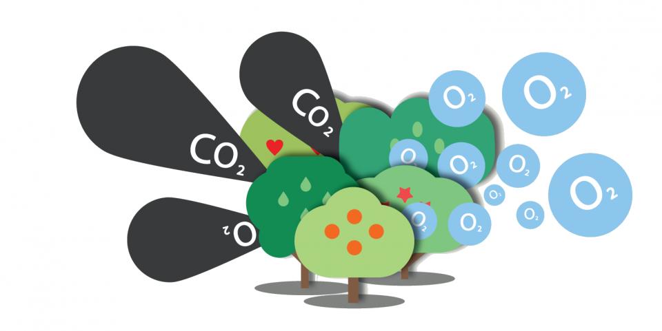 huella de carbono, notas naturales, árboles, co2, oxigeno