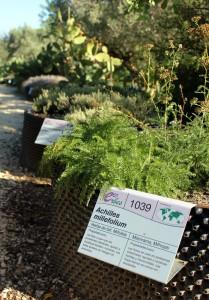 jardin botanico delta del ebro
