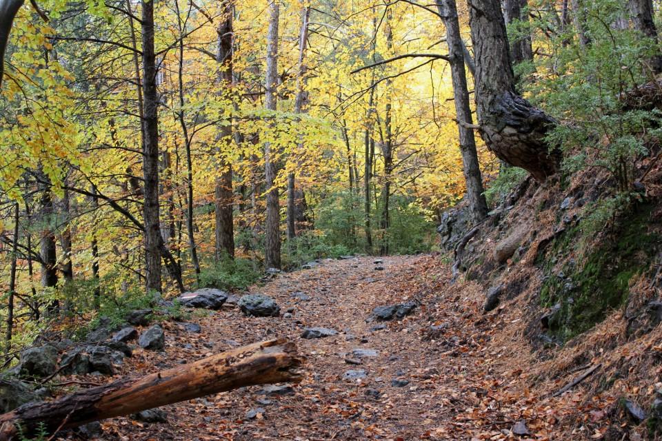 plantas silvestres otoño, pirineos, excursion, bosque, hojas secas, sendero, notas naturales