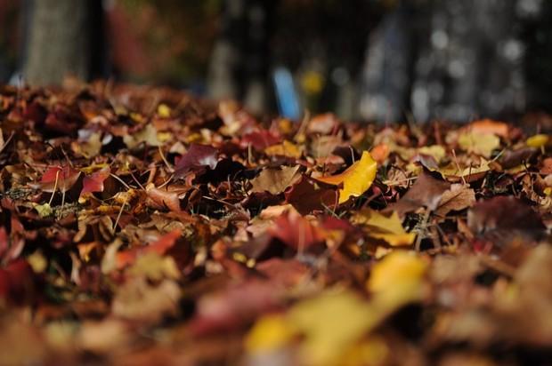 Plantas medicinales silvestres de otoño, hojas secas, bosque, notas naturales