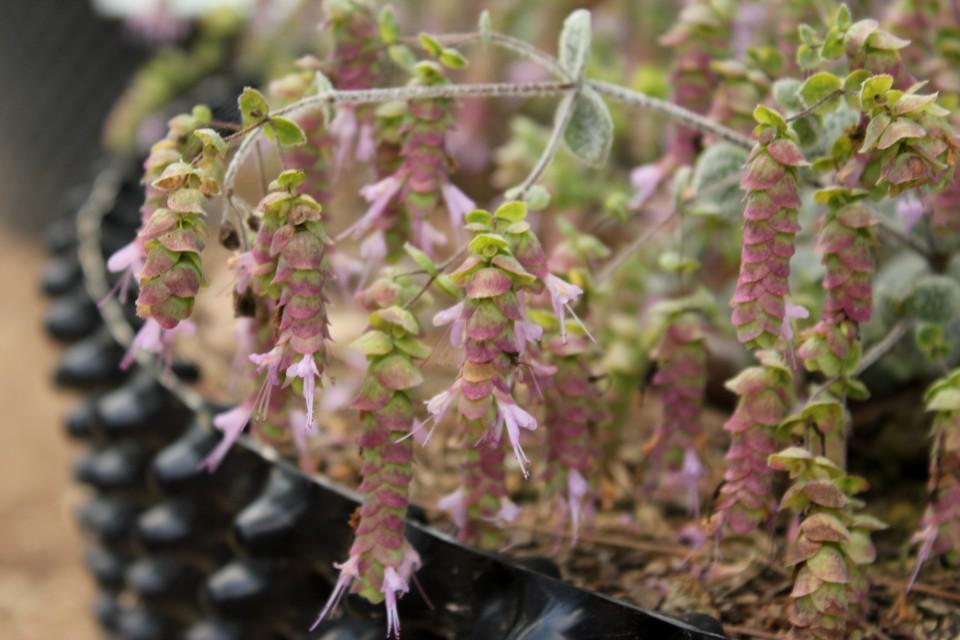 jardin botanico plantas medicinales