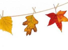 Puertas abiertas jardin botanico barcelona, fiesta otoño, notas naturales