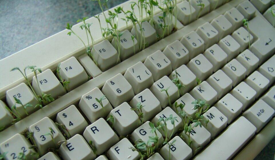 mejores blogs de estilo de vida saludable, teclado, planta, germinados, notas naturales
