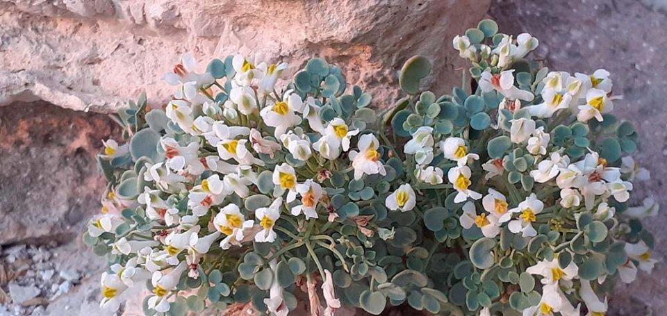 identificar plantas silvestres