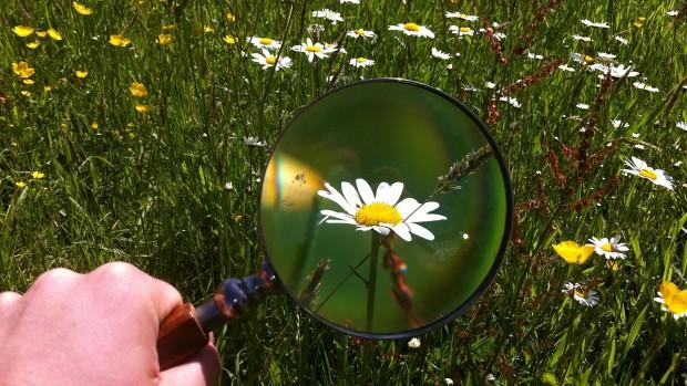 identificar plantas medicinales, lupa, mano, flores, margaritas, notas naturales