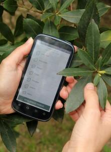 identificar plantas medicinales, movil, hojas, mano, notas naturales