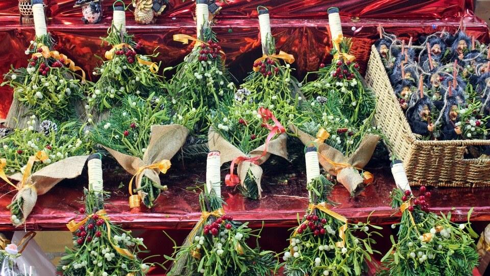 plantas fira de santa llúcia barcelona, notas naturales