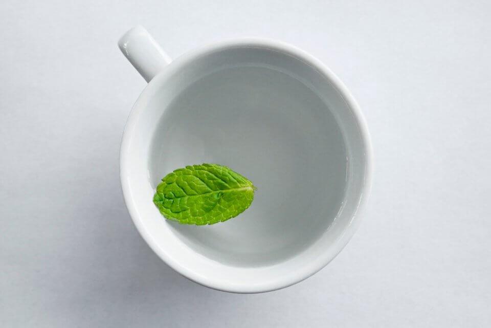 taza blanca con una hoja de menta, planta de la monografías escop de las plantas medicinales