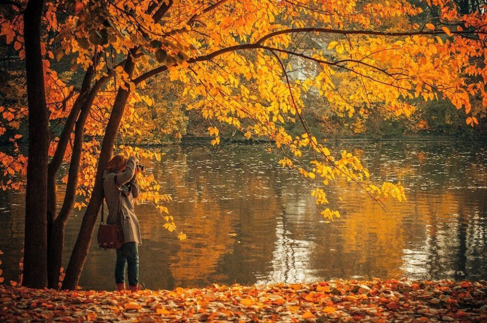 Una mujer sacando fotos de plantas en un bosque en otoño