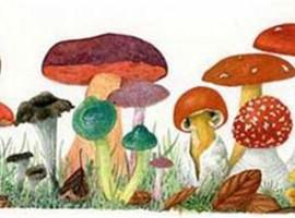 taller de dibujo botanico, notas naturales