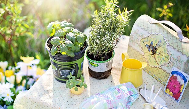 diseño de jardines, plantas aromaticas, albahaca, romero, notas naturales