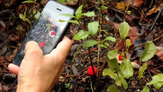 identificar plantas, plantnet, notas naturales
