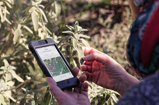 identificacion plantas con plantnet