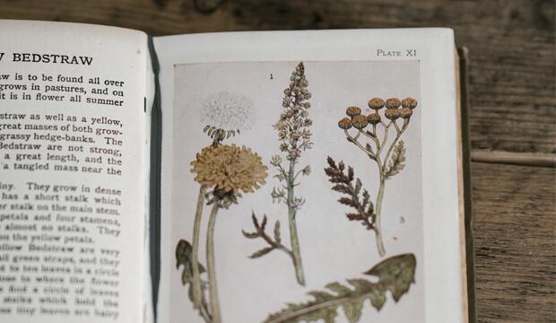 libro de plantas medicinales con imagenes