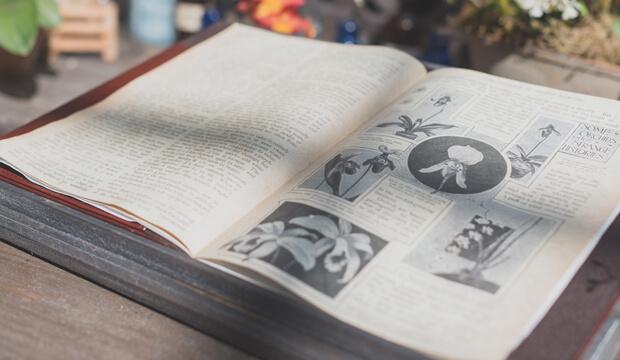 libro de plantas medicinales con ilustraciones, notas naturales