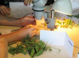 taller botanica gratis, notas naturales