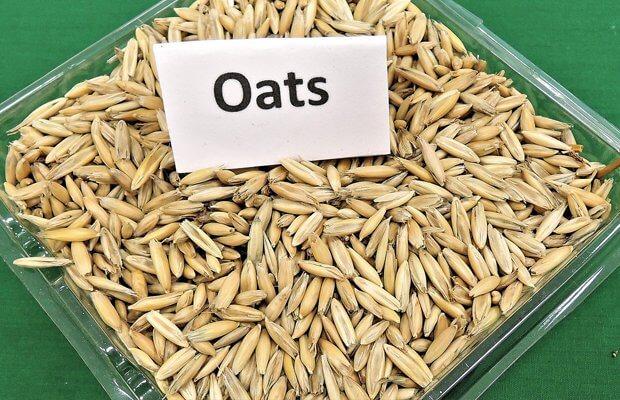 alternativas al arroz y la pasta, avena, notasnaturales