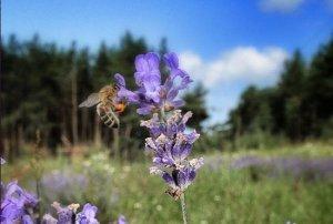 Curso online: Gestión del dolor con aromaterapia @ Aula Virtual Flor-Esser by Antonia Jover