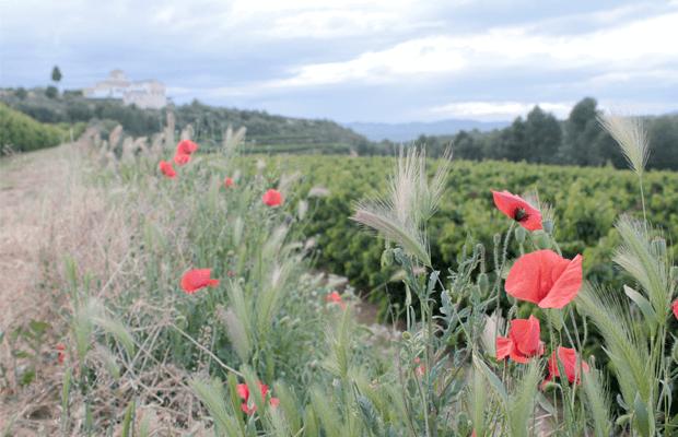 Ribera del Ebro, vacaciones entre naturaleza y tradición