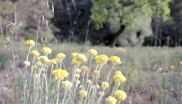 Ribera del ebro, flora