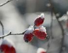 botiquin natural de invierno, notas naturales