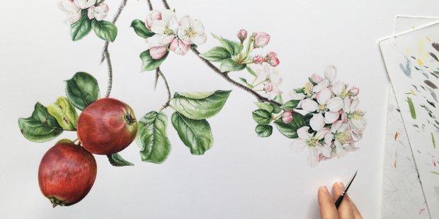 taller ilustracion botanica barcelona 2018