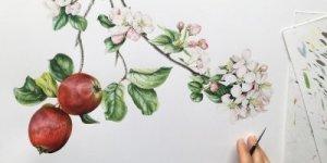 Pintando plantas: taller de ilustración botánica con Işık Güner @ Barcelona | Catalunya | España