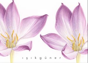 Iniciación a la ilustración botánica con Isik Güner en Barcelona @ Art Valles | Barcelona | Catalunya | España