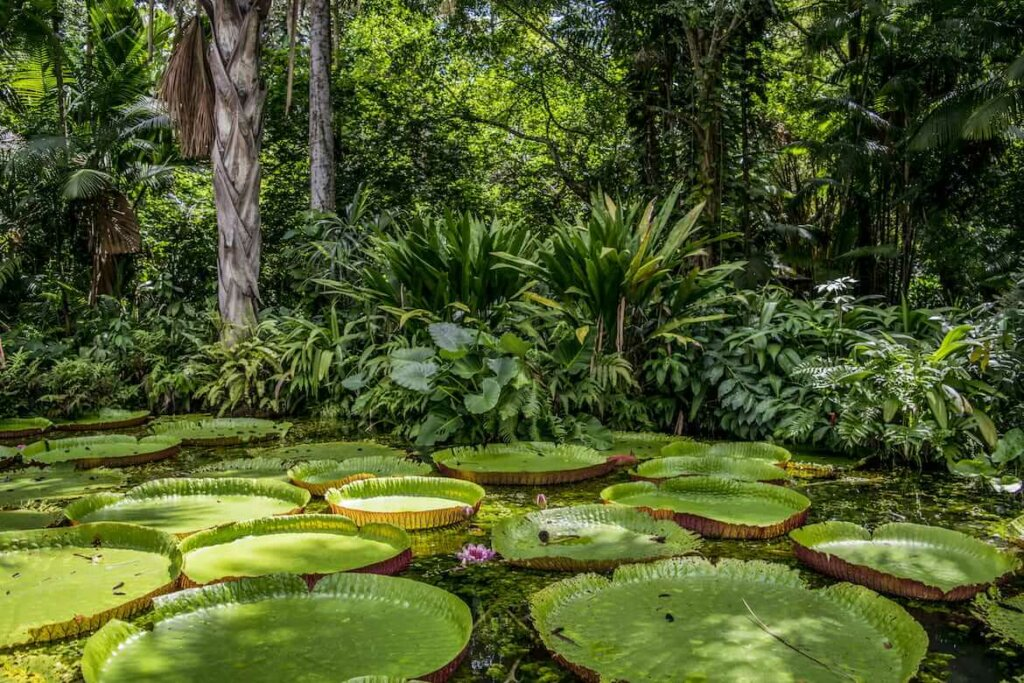 en la foresta amazónica es dónde más plantas medicinales hay en todo el planeta