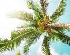 fruta tropical propiedades