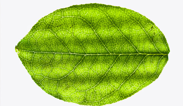 principios activos y plantas medicinales