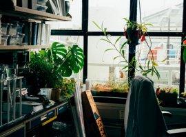 principios activos y plantas medicinales, notas naturales
