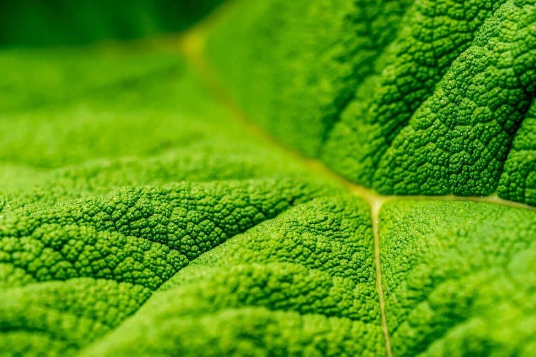 macro hoja verde de una planta, notas naturales