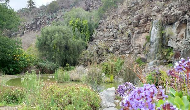 13 plantas medicinales de Canarias + recursos sobre su uso tradicional