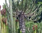 Plantas medicinales de Canarias, notas naturales