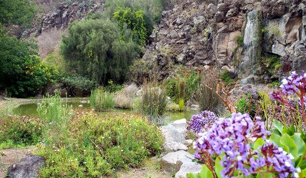 jardin botanico viera y clavijo