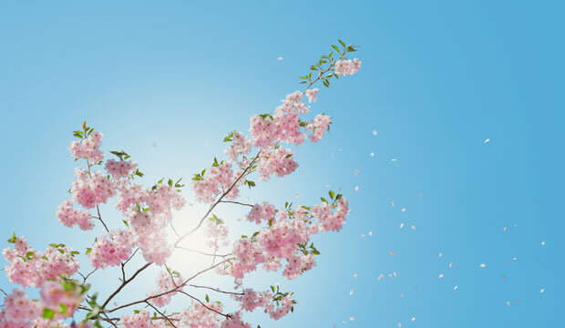 flores de un árbol que dispersan pólen