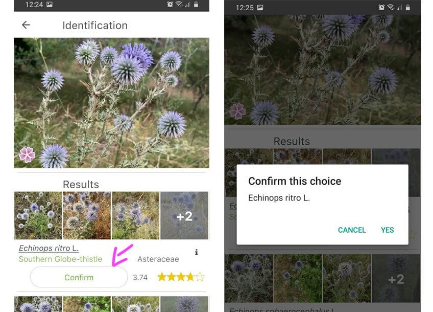 Capturas de pantalla que muestran como identificar una planta con la app plantnet