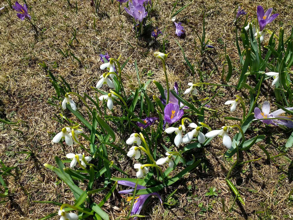 Flora Parque nacional Piatra Craiului