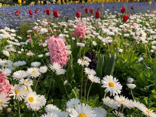 que ver en bucarest, flores y parques